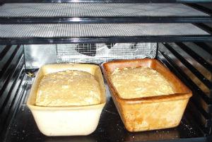 bread rising in dehydrator