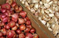 bulk shallots and garlic
