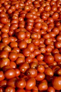 bulk tomatoes