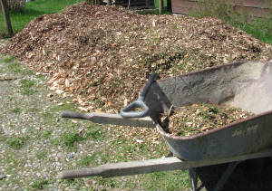 Cedar Woodchips, straight from the logger