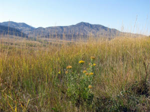 prairie grasses in Colorado