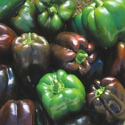 Chocolate Peppers through Seed Savers