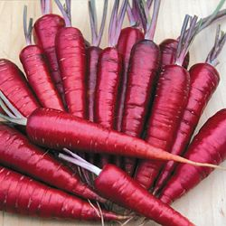 Dragon Carrots from Seed Savers