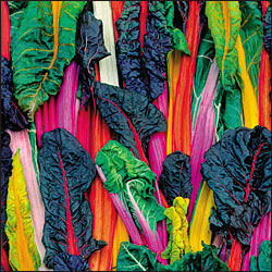 5 color silverbeet swiss chard from Seed Savers