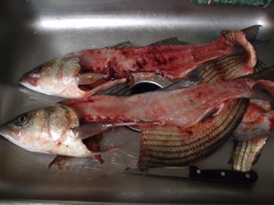 wash the blood off of the fish carcass