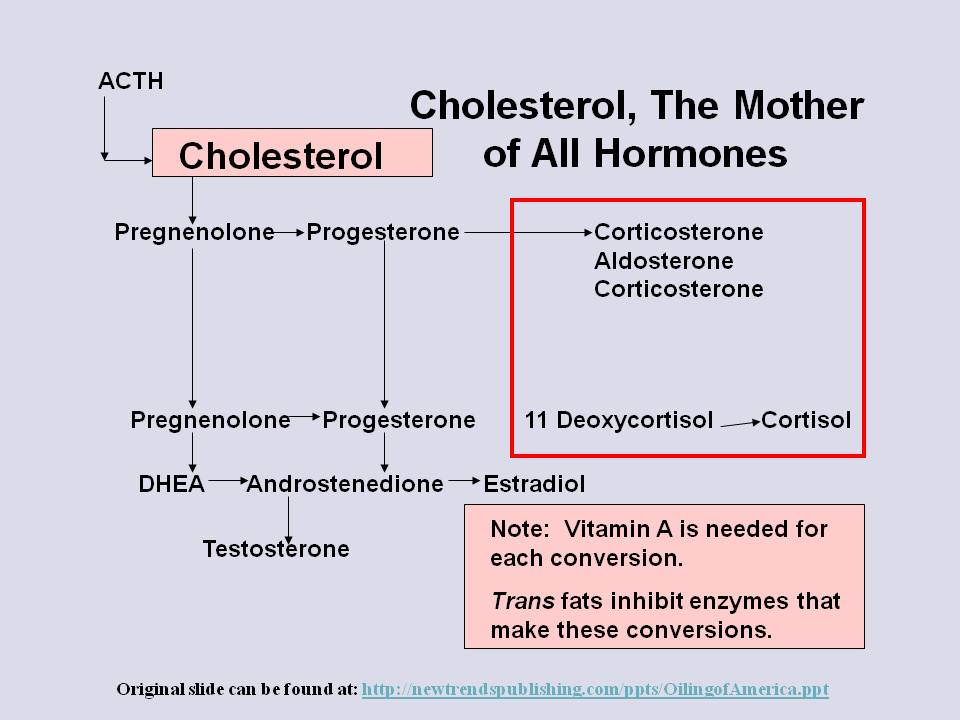 Cholesterol the Mother of all Hormones