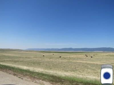 Cows in Closed Loop