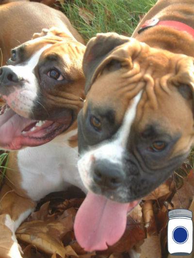 Chaya & Wilson's Boxers