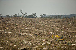 Palm Oil destroying Rainforest