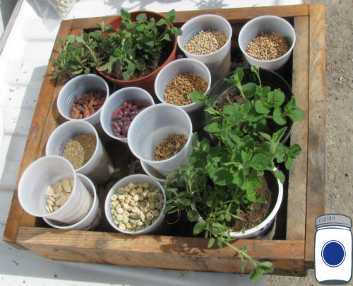 Seeds and Starts