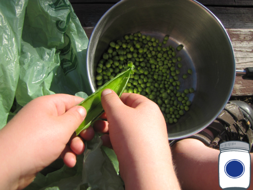 Scooter Shelling Peas