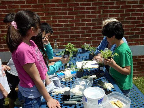 National Garden Club Projects