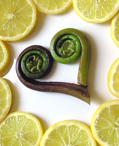 Fiddleheads & Lemon Slices