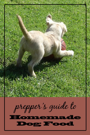 Prepper's Guide to Homemade Dog Food