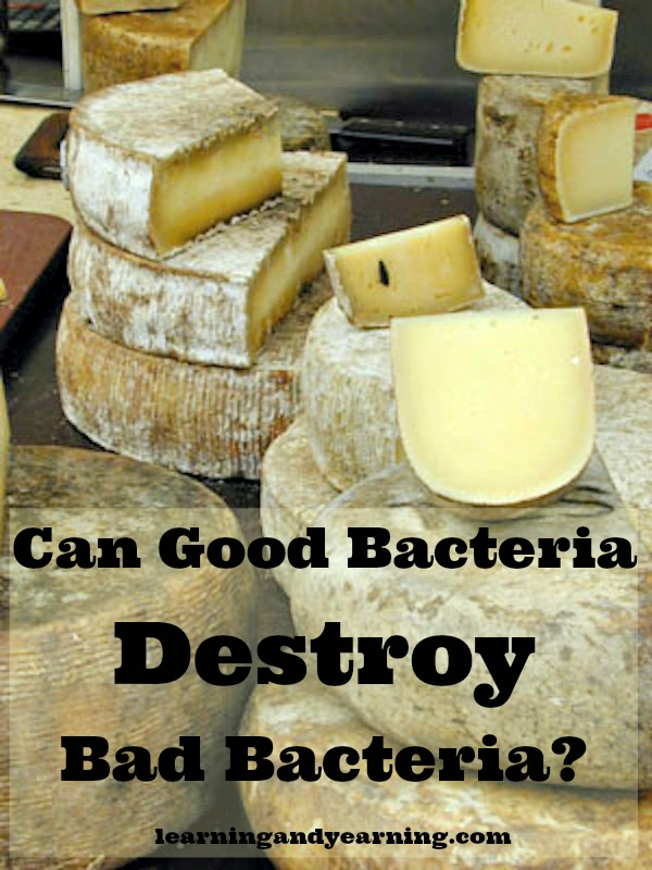 Good Bacteria kills Bad Bacteria