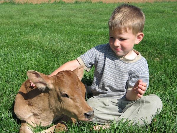 Raw Milk Boosts Immunity