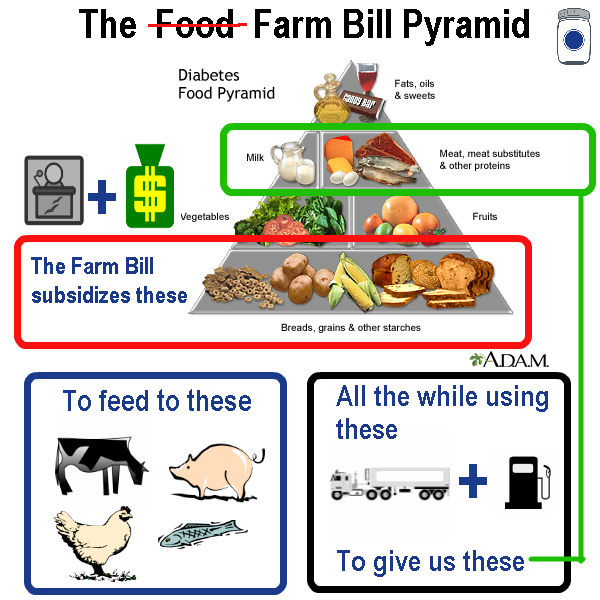 Food Pyramid Annotated