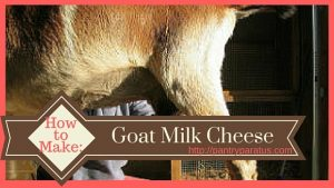 How to Make Goat Milk Cheese