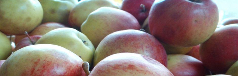 Produce, Prepare, & Preserve Your Harvest