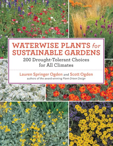 Waterwise Plants for Sustainable Gardens