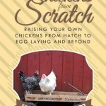 Chickens from Scratch by Janet Garman