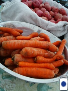 carrots potatoes from garden