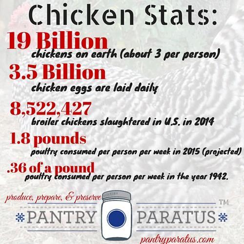 Chicken Stats