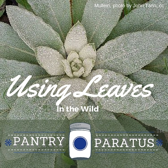 Using Leaves in the wild