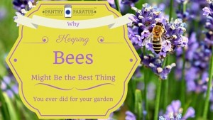 Keeping Bees Best Thing for your garden