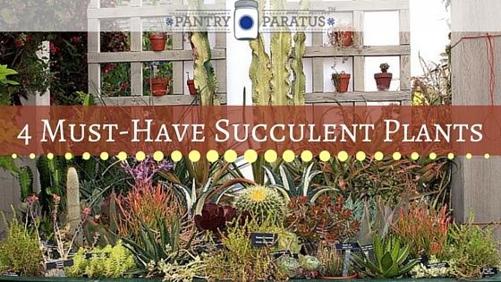 4 Must-Have Succulent Plants