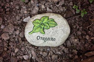 Growing an herb garden- oregano