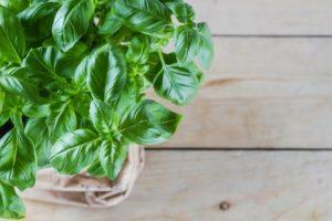 growing an herb garden- basil