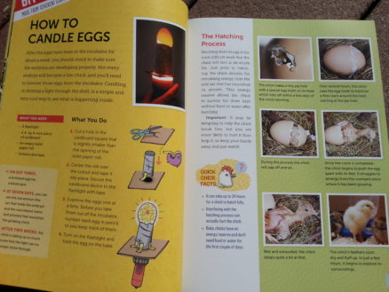 How to Candle Eggs