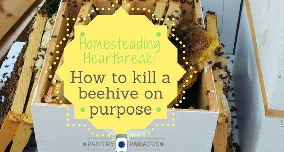 Homesteading Heartbreak: Killing a beehive on purpose