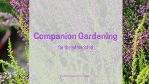companion gardening for the intimidated